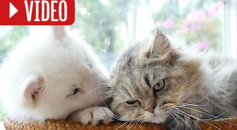 Hund und Katze aneinander gewöhnen