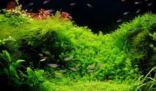 Anfängerfehler in der Aquaristik