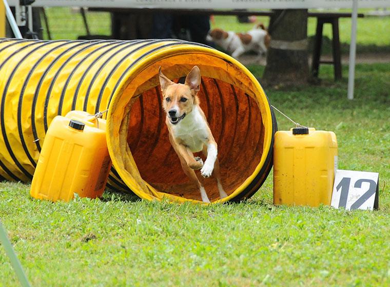 Hundesportarten Agility