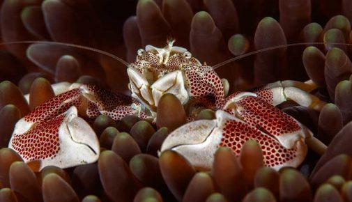 Krabbenwelt