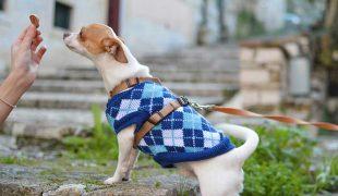 Outdoor Hundeerziehung