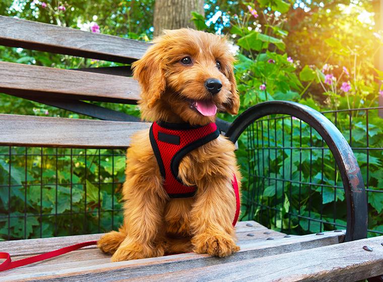 Step-In Geschirr für Hunde
