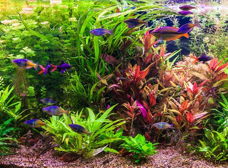 neues aquarium alles zur planung zooroyal magazin. Black Bedroom Furniture Sets. Home Design Ideas