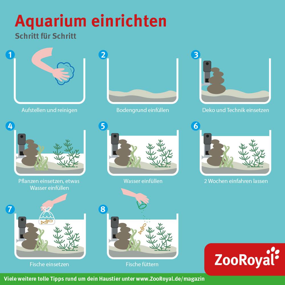 Aquarium einrichten Schritt für Schritt