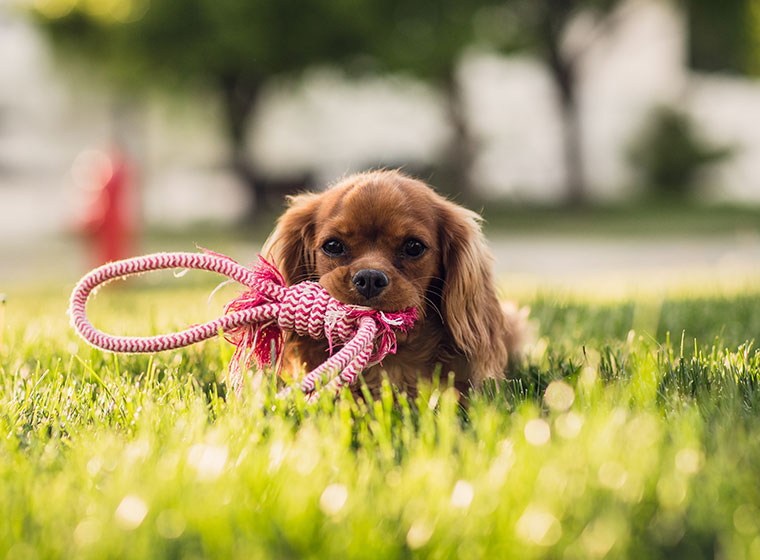 Beschäftigung für den hund selber machen zooroyal magazin