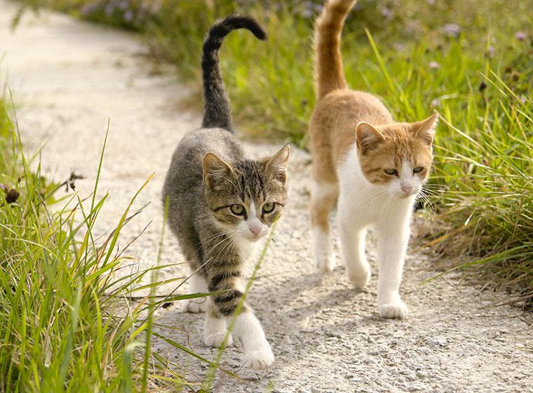 ruhige katzenrasse wohnung