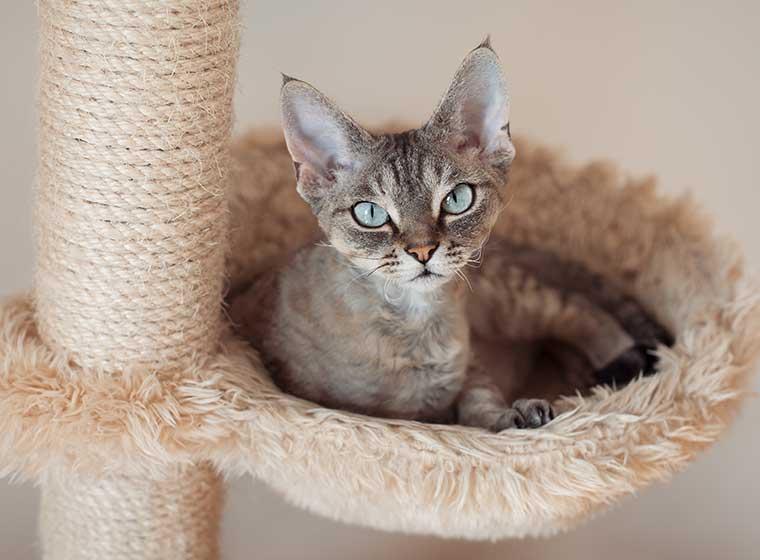 Katzenmöbel selber bauen