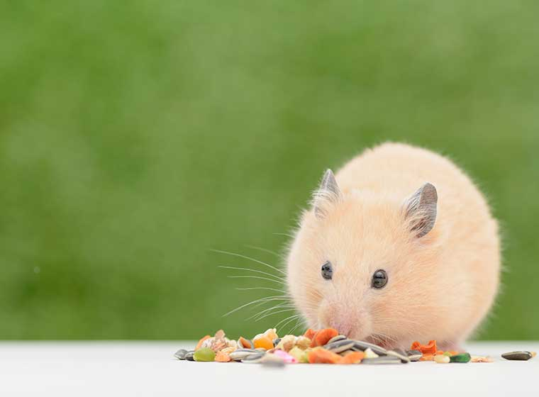 Leckerlis für Kleintiere