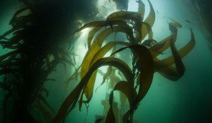 Schnecken im gartenteich sinnvoll oder nicht zooroyal for Algen im naturteich