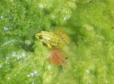 Algen im Teich: Natürliche Hilfsmittel
