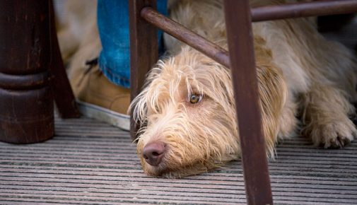 Lokalbesuch: mit Hund