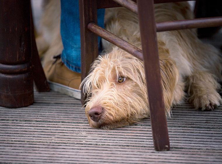 Lokalbesuch: mit dem Hund im Restaurant
