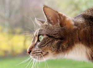 Katze als Teichräuber