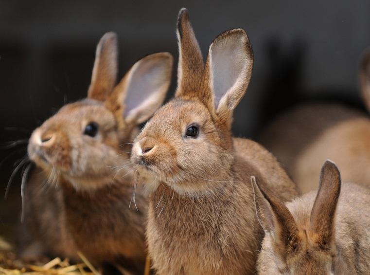 Gemeinsame Kaninchen Ernährung: das gehört in den Napf | ZooRoyal Magazin @ZF_49