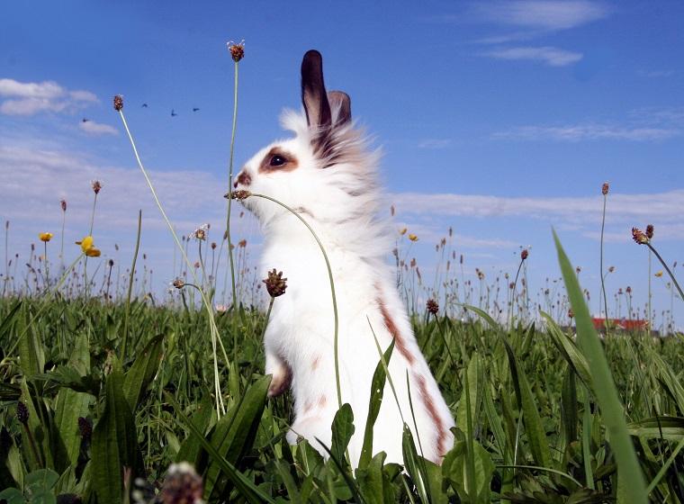 Kaninhop: Kaninchen beschäftigen