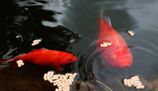 Alternative Fischfütterung