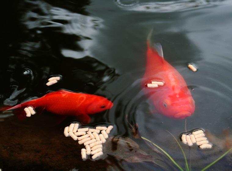 Atemberaubend Tipps zur alternativen Fischfütterung | ZooRoyal Magazin #SB_43