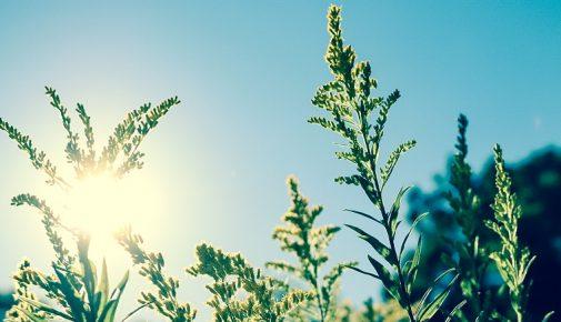 Solartechnik für den Gartenteich