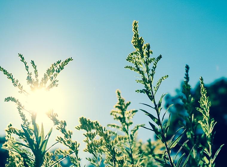 Solaranlagen für den Gartenteich