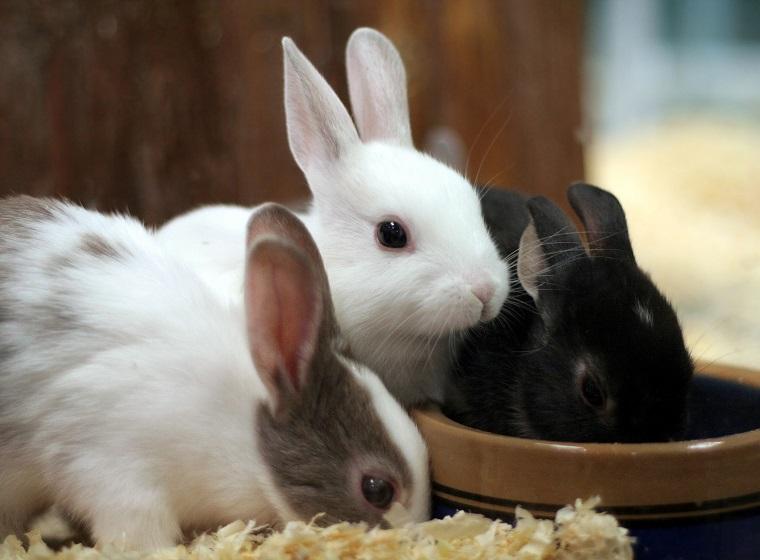 Trinkgefäße für Kleintiere: