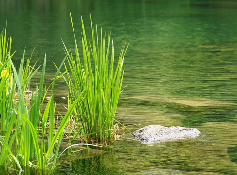 Xylit Walzen: Natürliche Teichreinigung