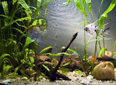 Filter im Aquarium