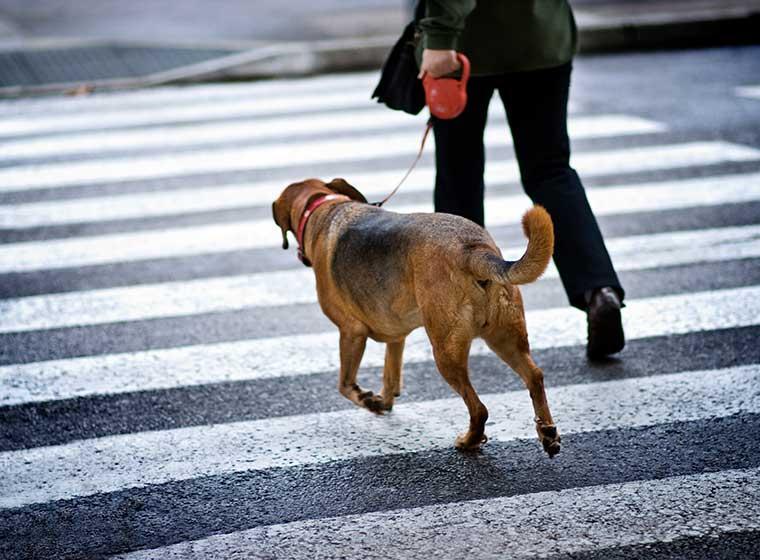 Hundebeleuchtung
