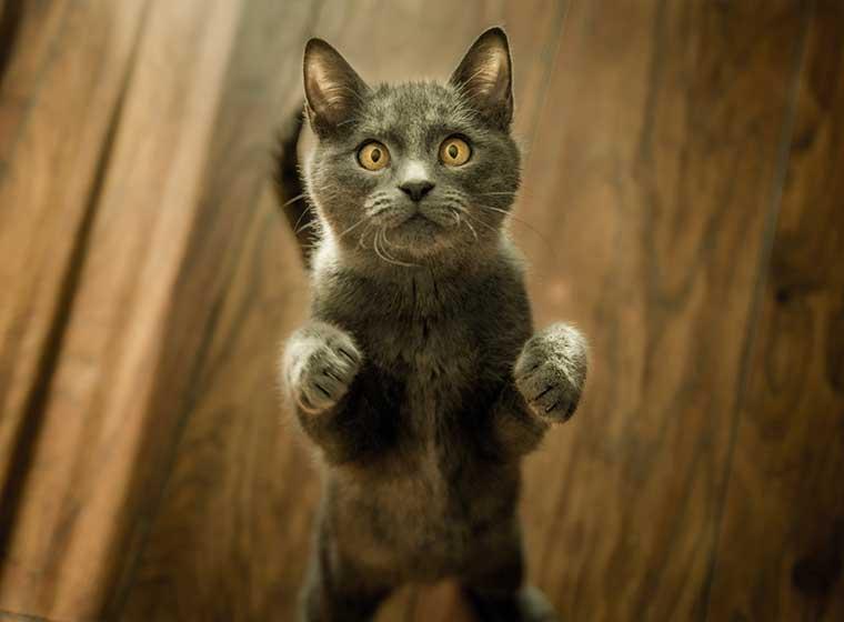 Katzenerziehung - so klappt es kinderleicht | ZooRoyal Magazin