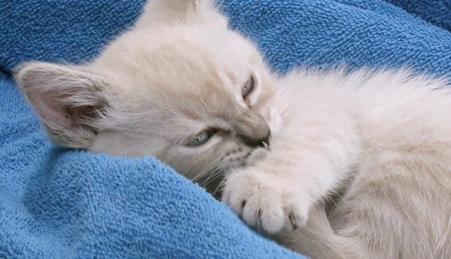 Umgang mit Kitten