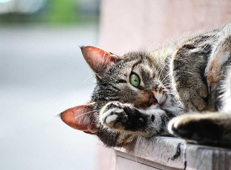 Wurmbefall bei Katzen