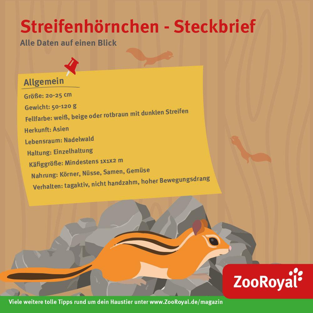 Streifenhörnchen Steckbrief