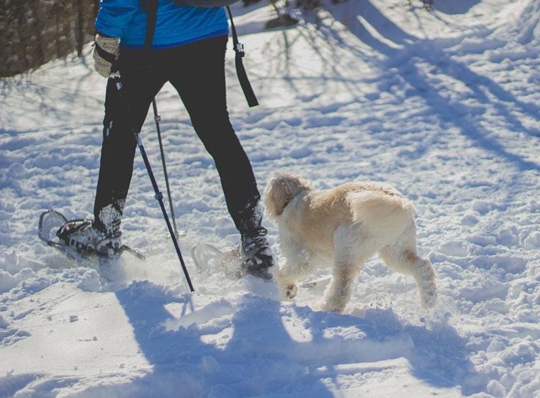 Winterurlaub mit dem Hund: Tipps und Reiseziele
