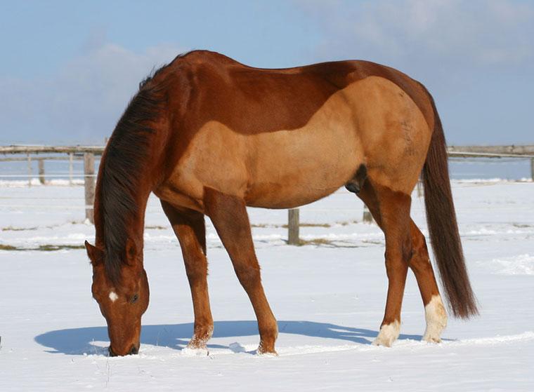 Pferd scheren: Tipps für den Frisörbesuch