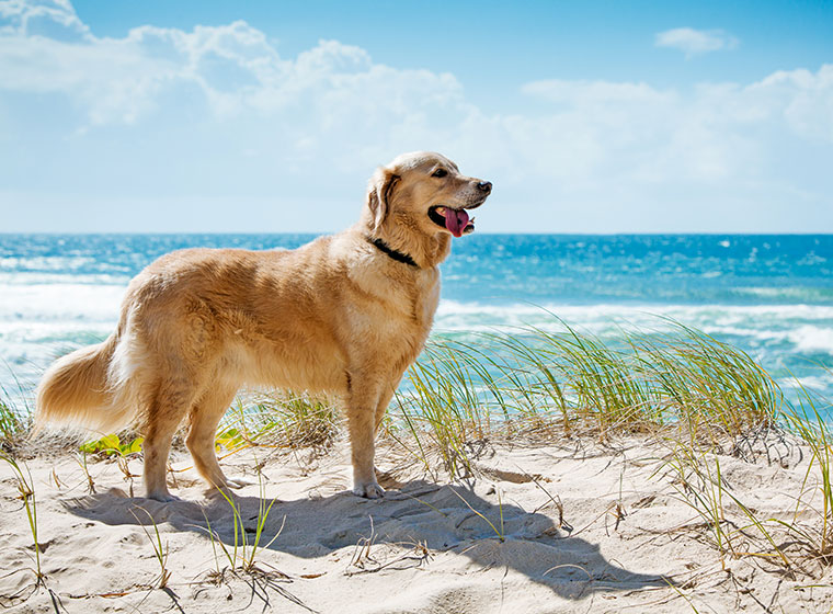 Urlaub mit Hund: Sommerferien mit dem Vierbeiner