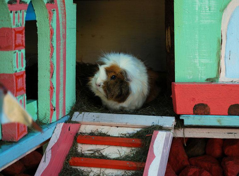 Tipps für die artgerechte Kleintierhaltung