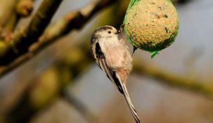 Wildvögel füttern