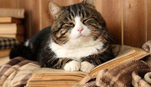 Katzensenioren: Katzen im Alter