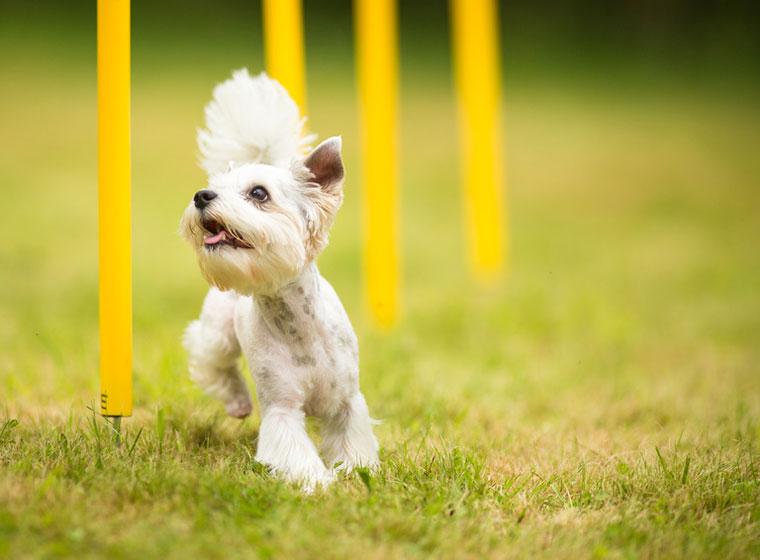 Degility Hundesport