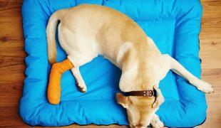 Knochenerkrankungen beim Hund