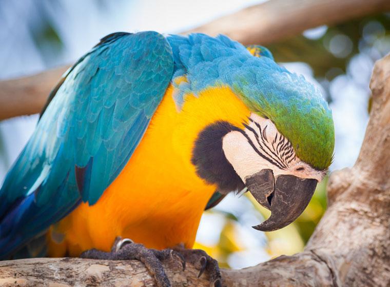 Vogelkrankheiten erkennen und behandeln