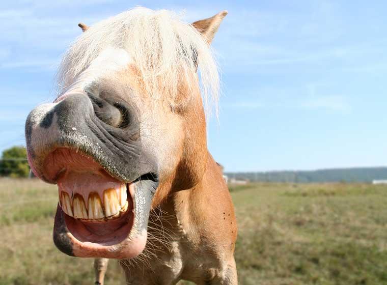Pferdesprache