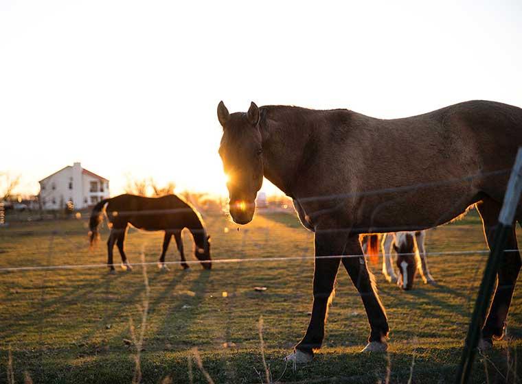 Pferdepflege im Sommer