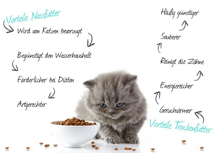 Mischfütterung für Katzen Infografik
