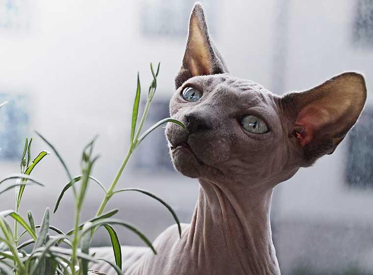 Kuriose Katzenfakten