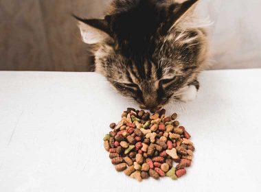 Mischfütterung für Katzen