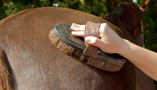 Putzzubehör für Pferde