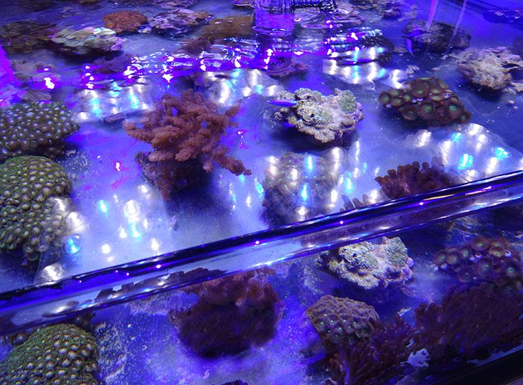 Vorteile von LEDs in der Aquaristik
