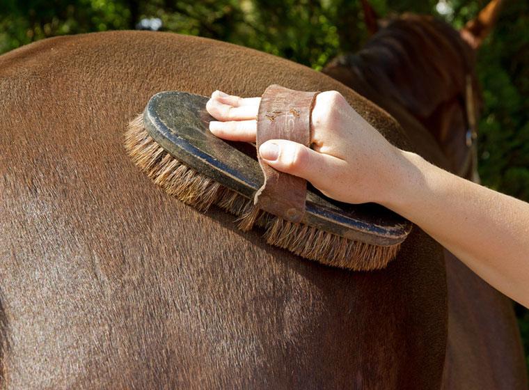 Putzzeug für Pferde: Das richtige Putzzubehör