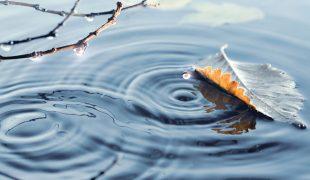 Teichpflege im Winter: Gartenteich winterfest machen