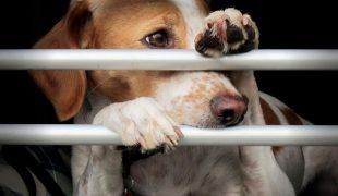 Welttierschutztag: Tierschutzorganisationen